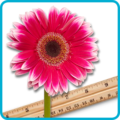 Practice Measurement with Flowers!
